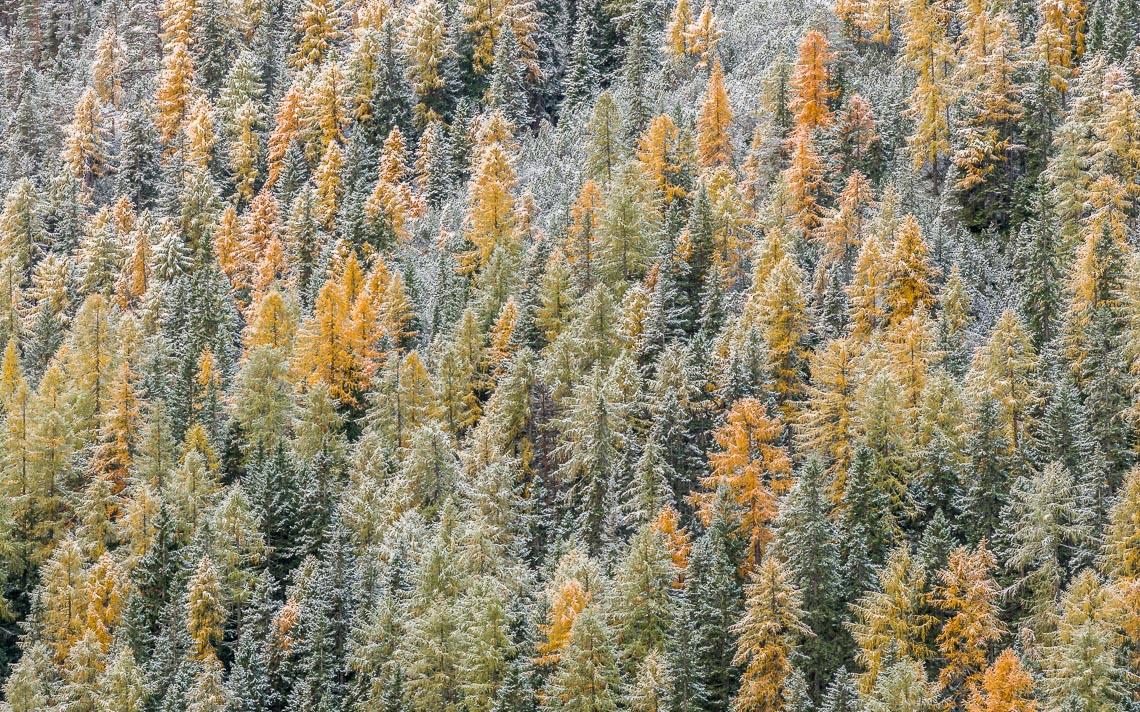 dolomiti foliage autunno nikon school workshop paesaggio notturna via lattea startrail 00028