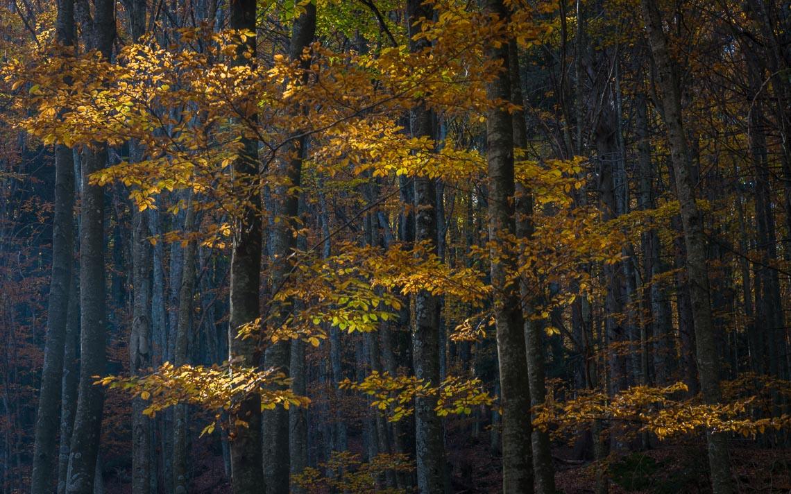 foliage autunno nikon school workshop paesaggio appennino 00001