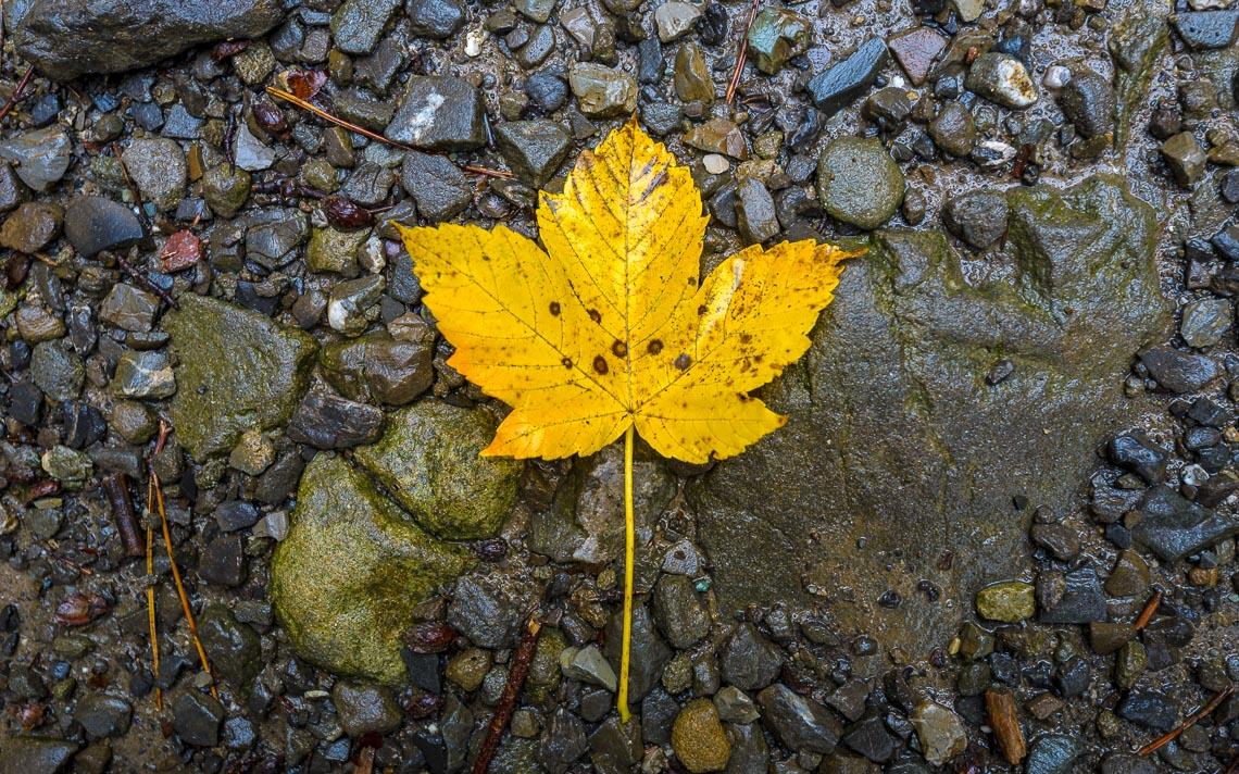 foliage autunno nikon school workshop paesaggio appennino 00004