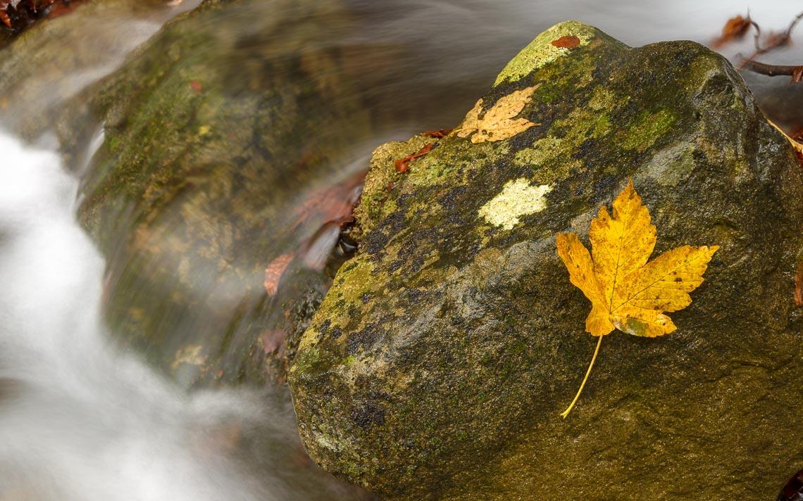 foliage autunno nikon school workshop paesaggio appennino 00006
