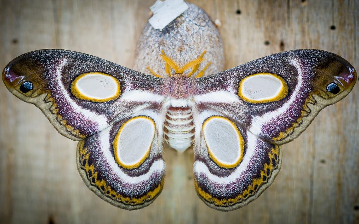 macro nikon school workshop fotografia casa farfalle 00002