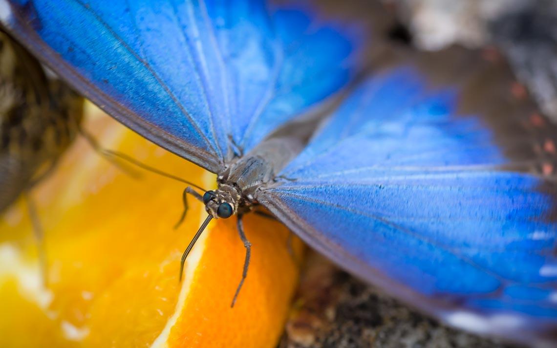 macro nikon school workshop fotografia casa farfalle 00007