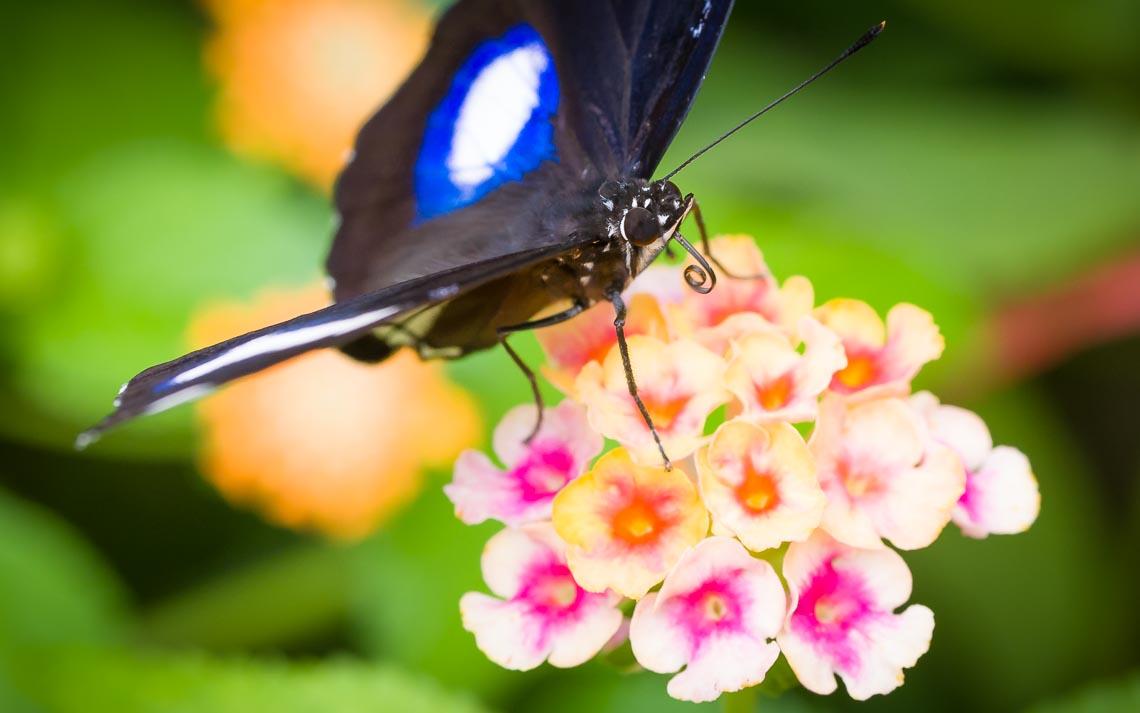macro nikon school workshop fotografia casa farfalle 00011