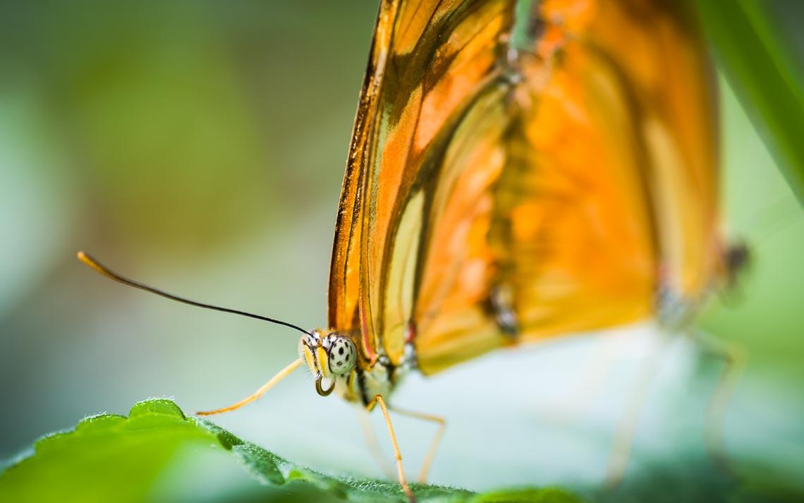 macro nikon school workshop fotografia casa farfalle 00015