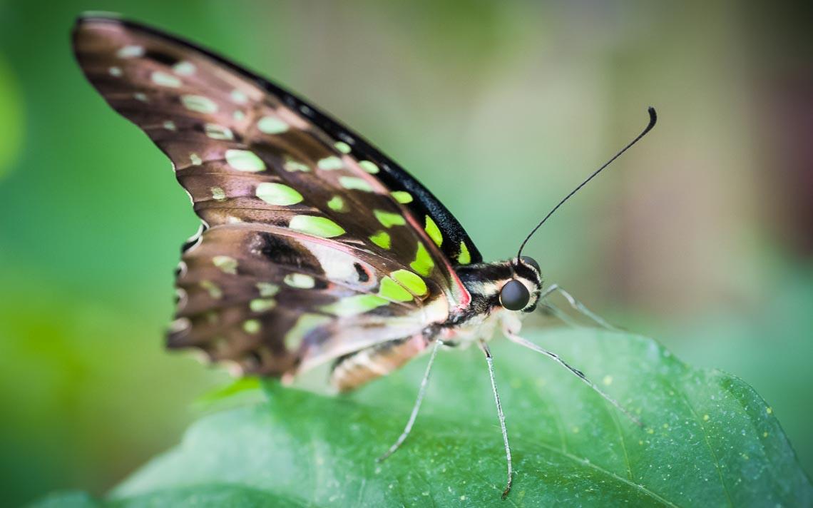 macro nikon school workshop fotografia casa farfalle 00016