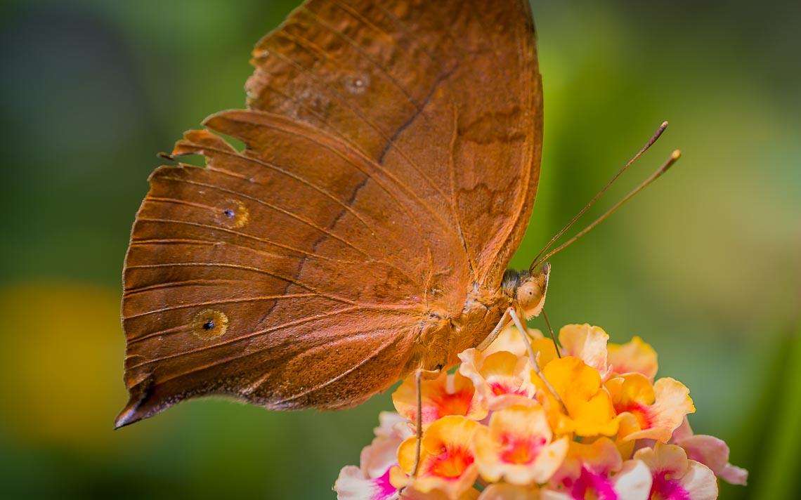 macro nikon school workshop fotografia casa farfalle 00017