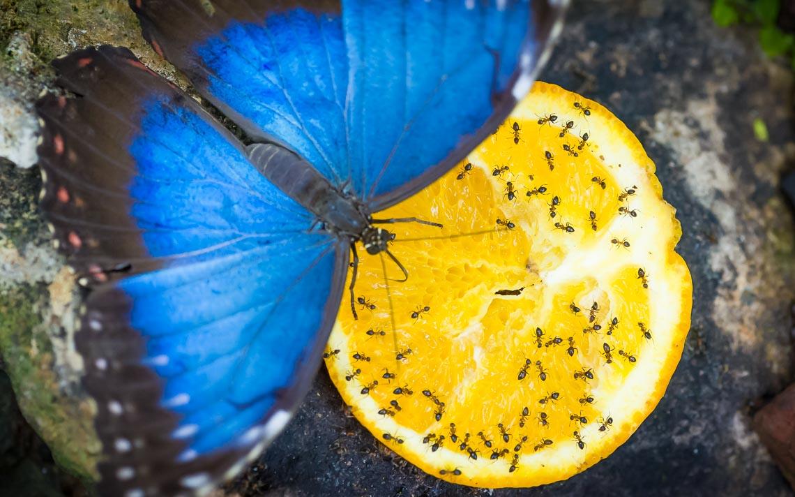 macro nikon school workshop fotografia casa farfalle 00018