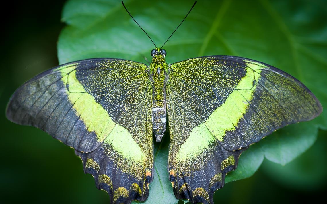 macro nikon school workshop fotografia casa farfalle 00019