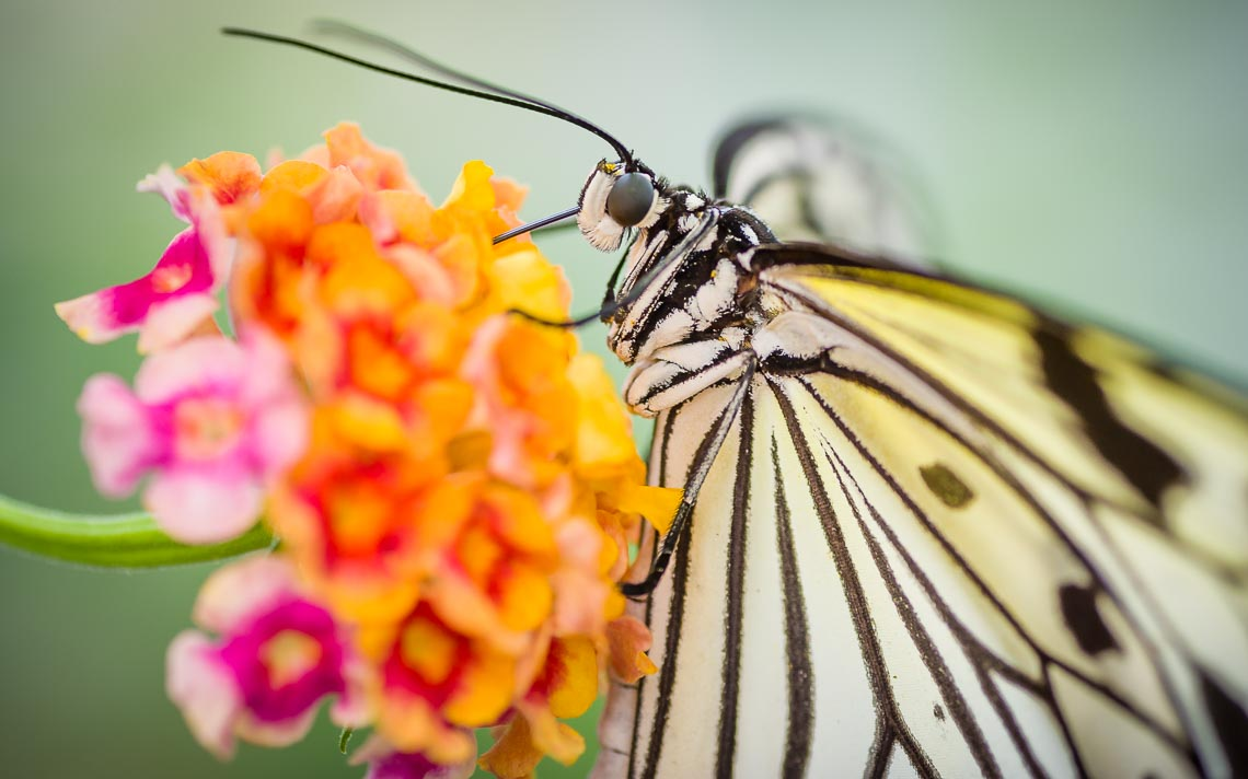 macro nikon school workshop fotografia casa farfalle 00020