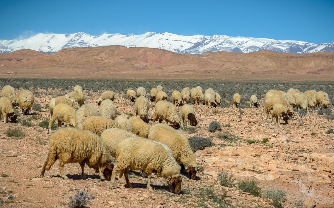 marocco nikon school viaggio fotografico workshop paesaggio viaggi fotografici deserto sahara marrakech 00027
