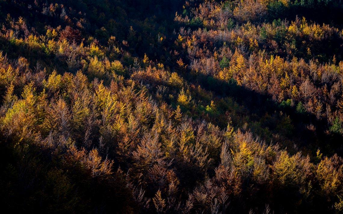 foliage autunno nikon school workshop paesaggio appennino 00020