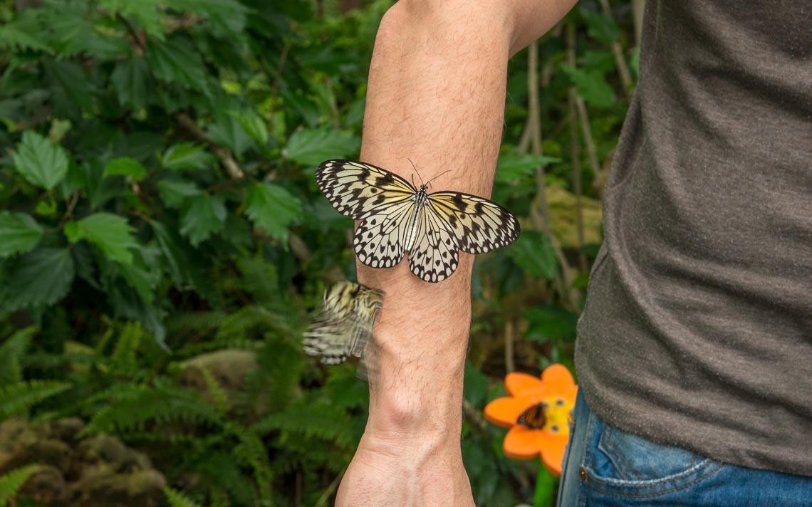 macro nikon school workshop fotografia casa farfalle 00008