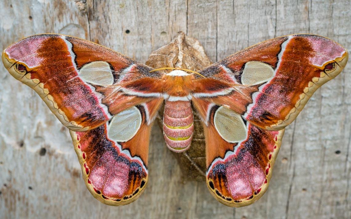 macro nikon school workshop fotografia casa farfalle 00021
