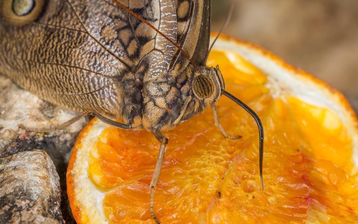 macro nikon school workshop fotografia casa farfalle 00022