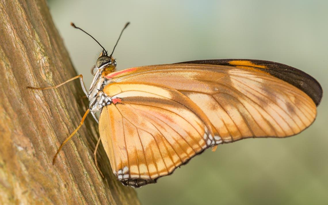 macro nikon school workshop fotografia casa farfalle 00023