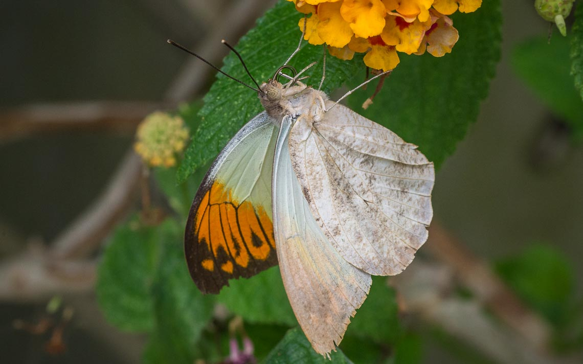 macro nikon school workshop fotografia casa farfalle 00025