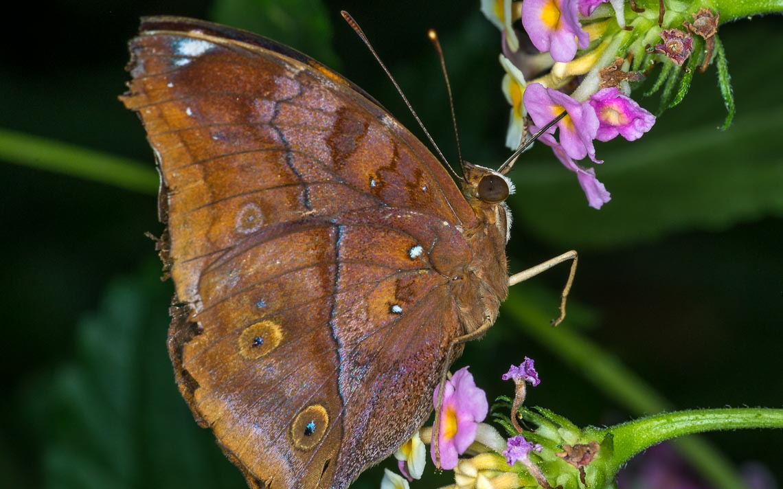 macro nikon school workshop fotografia casa farfalle 00026