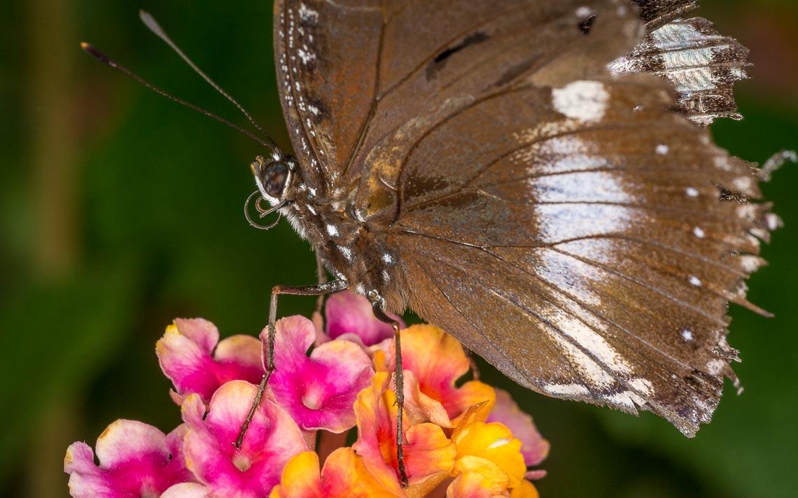 macro nikon school workshop fotografia casa farfalle 00028