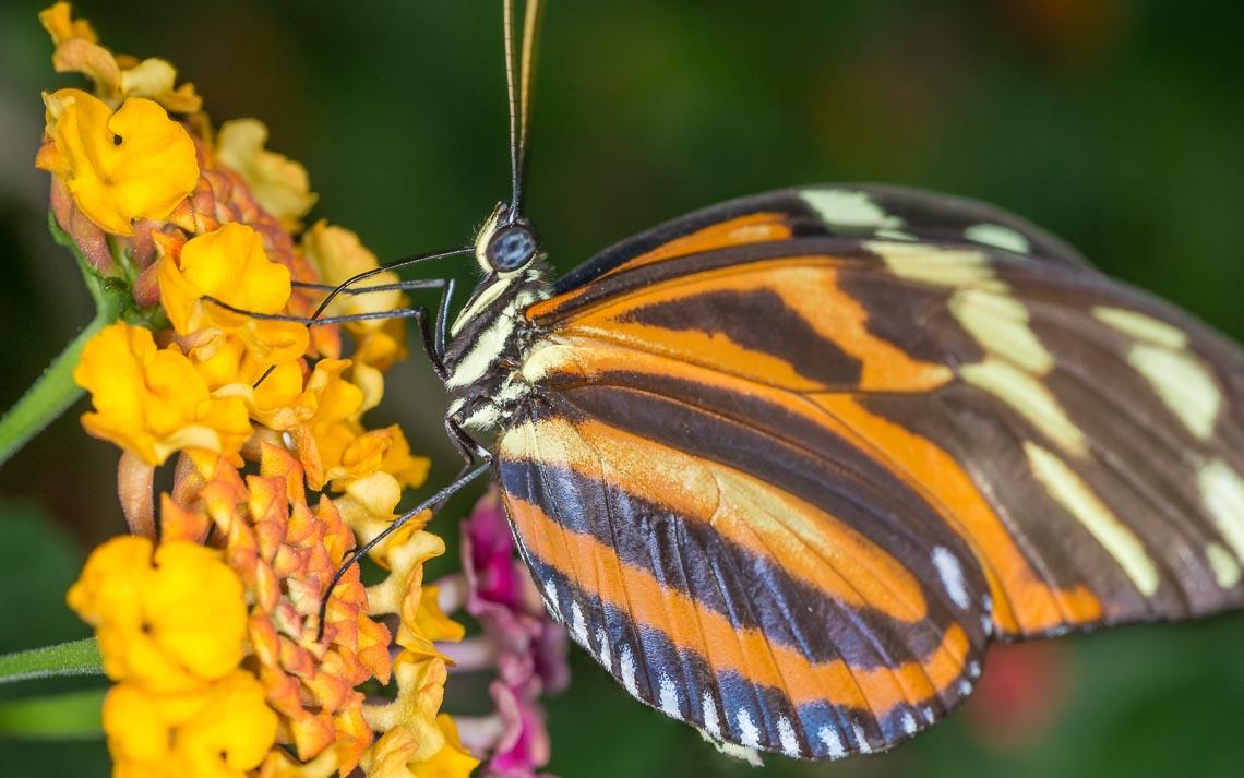 macro nikon school workshop fotografia casa farfalle 00030