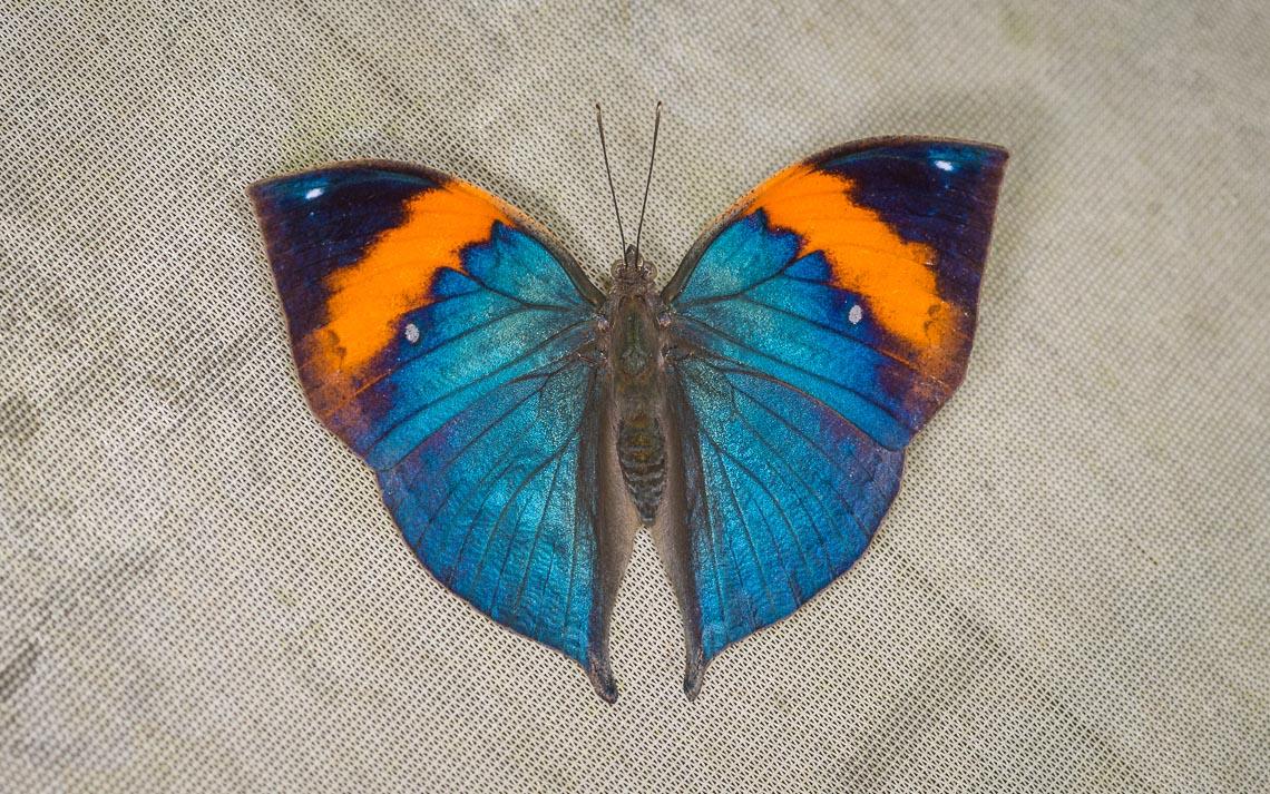 macro nikon school workshop fotografia casa farfalle 00032