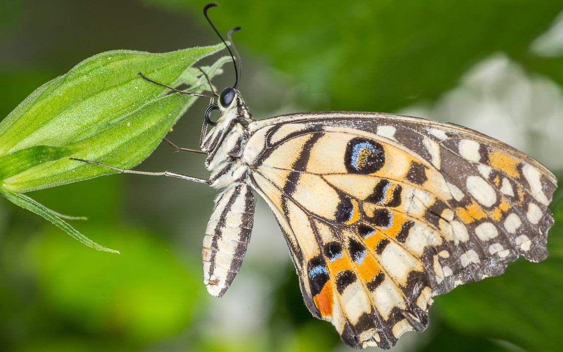 macro nikon school workshop fotografia casa farfalle 00033