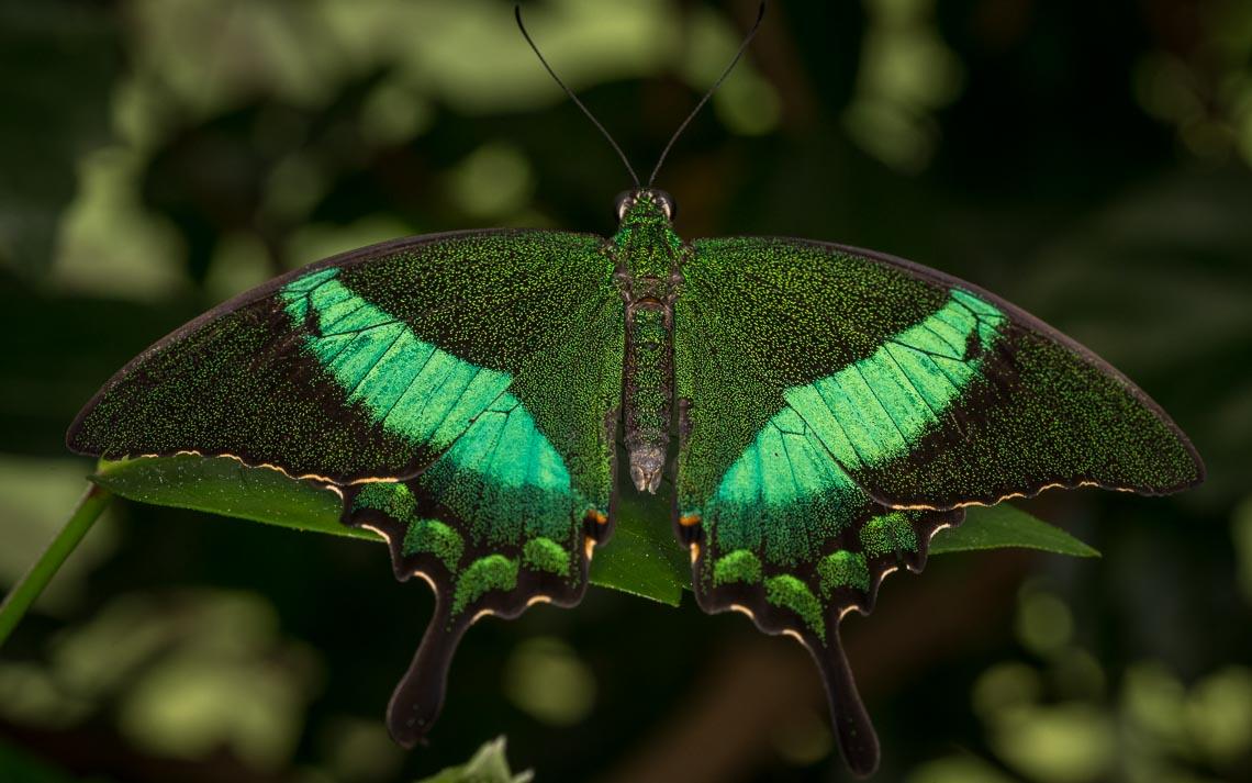 macro nikon school workshop fotografia casa farfalle 00034