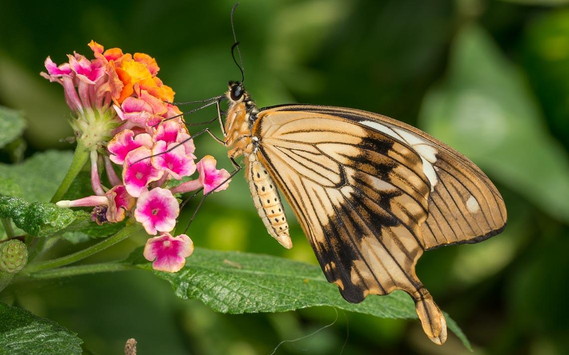 macro nikon school workshop fotografia casa farfalle 00035