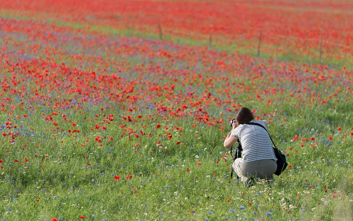 Castelluccio Fioritura Nikon School Workshop Paesaggio Notturna Via Lattea Startrail 00006