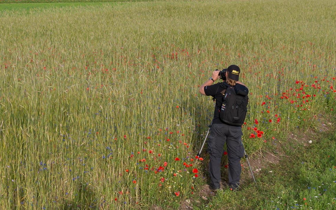 Castelluccio Fioritura Nikon School Workshop Paesaggio Notturna Via Lattea Startrail 00007