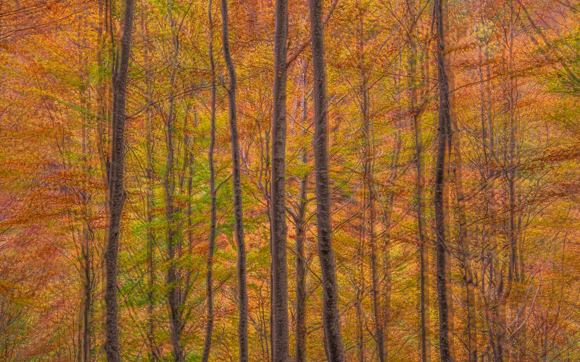 Foliage Autunno Nikon School Workshop Paesaggio Appennino 00032