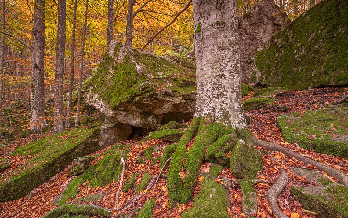 Foliage Autunno Nikon School Workshop Paesaggio Appennino 00035
